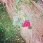 IMG_20140601_122238