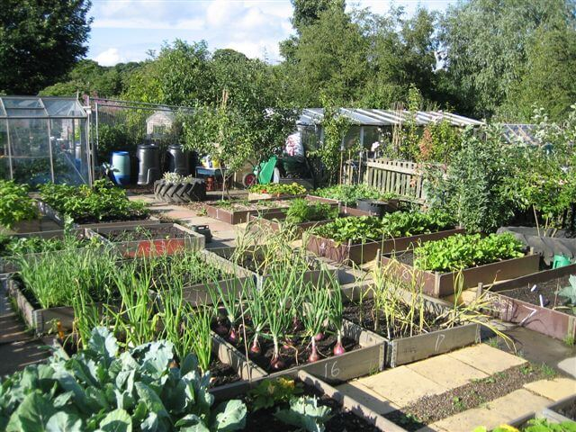 The big allotment challenge life as mrs d for Garden allotment ideas