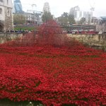 The Wave - Ceramic Poppies